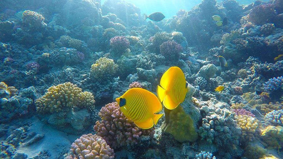 Egypt potápění